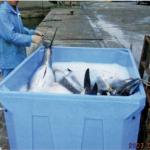 マグロやはまちなどの大型魚